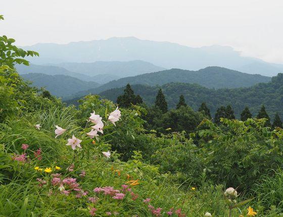植物園-別山.jpg