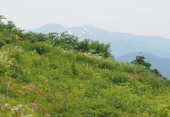 植物園-白山.jpg